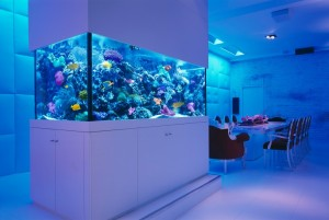 aquarium-740x498
